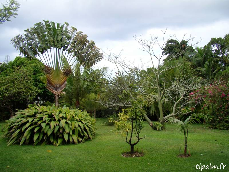 Beautiful jardin beau vallon maurice photos amazing for Le jardin 3 vallons
